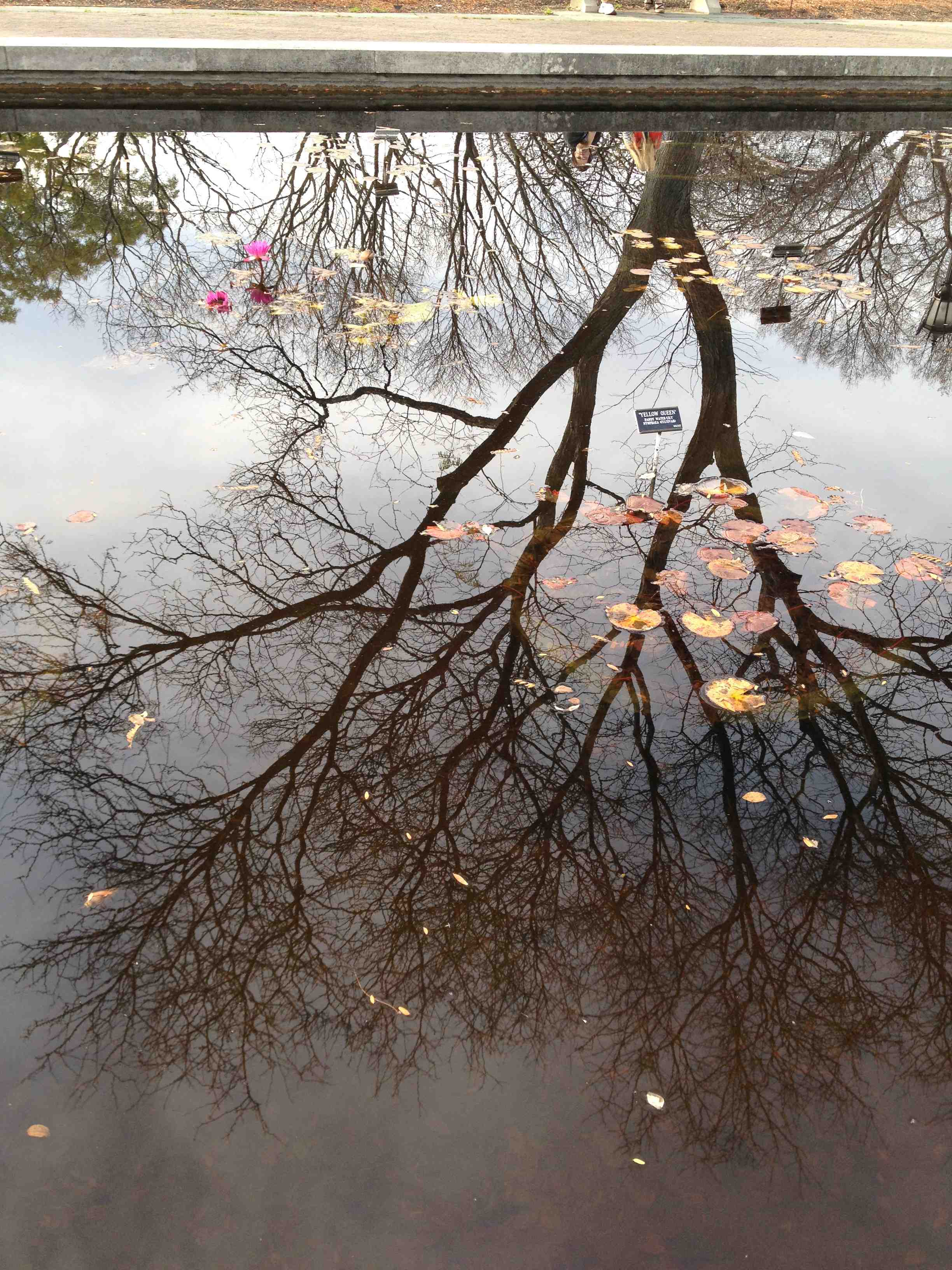 tree-reflection-BBG-lilypond.jpg